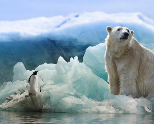 Eisbär Polarbär Pinguin