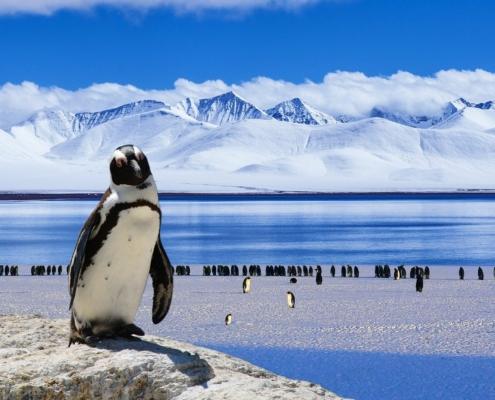 Pinguin Antarktis